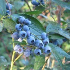 Top 10 Gezondste Fruit