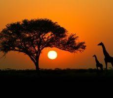 Top 10 Grootste Landen van Afrika (inwoners)