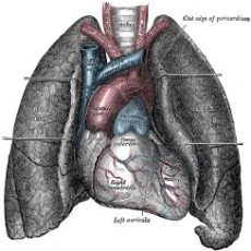 Top 10 Grootste Organen in het Menselijk Lichaam