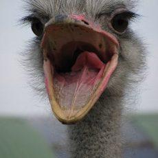 Top 10 Grootste Vogels ter Wereld