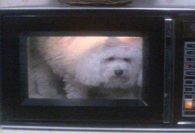 hond magnetron