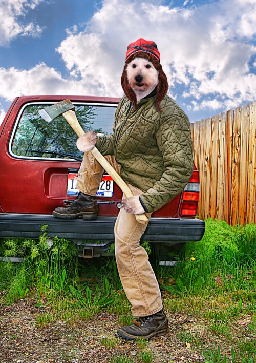 hond met bijil