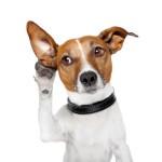 Top 10 Populairste Hondennamen