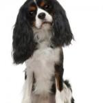 Top 10 Hondennamen Teefje & Reu