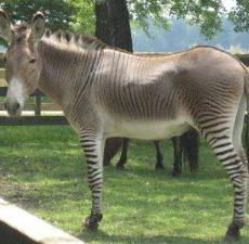 Top 10 Bizarre Hybride Dieren