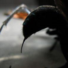 Top 10 Pijnlijkste Insectenbeten