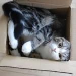 Top 10 Populairste Katten video's op Youtube