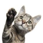 Top 10 Kattennamen