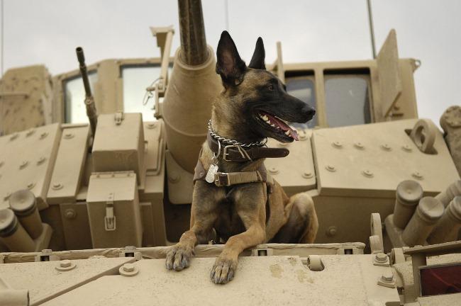 oorloghond