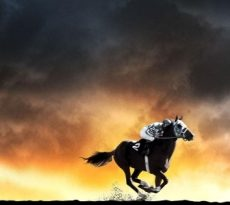 Top 10 Beste Paardenfilms