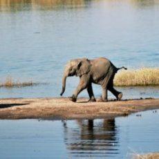 Top 10 Safariparken in Afrika