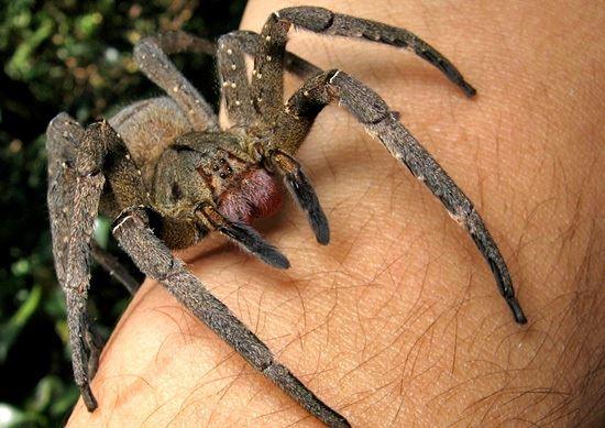 spinnengif