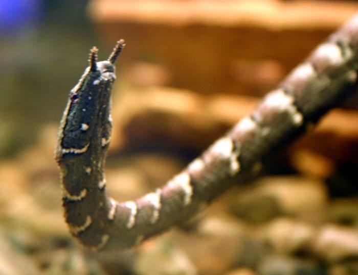tentakelslang