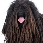 Top 10 Vreemde Hondenrassen