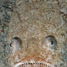 Top 10 Hele Vreemde Vissen